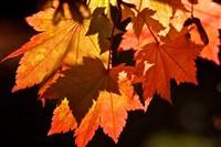 Kent Autumn Tints