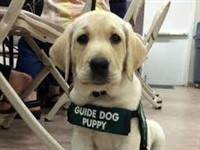 Leamington Spa & Guide Dogs Training centre