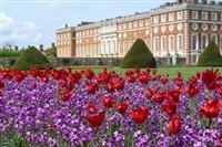 Hampton Court palace Tulip Festival
