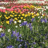 Harrogate Flower Show 2020