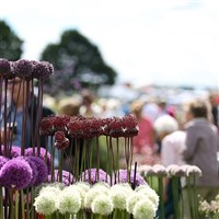 Hyde Hall Garden Show plus