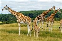 Port Lympne Wild Animal Park & Gardens