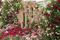 Peter Beales Rose Gardens plus Lunch