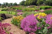 Sussex Prairie Garden and Steyning