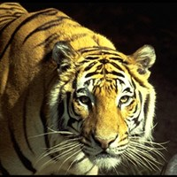 Zoos & Animals